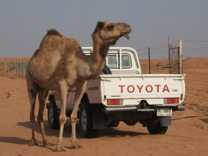 Toyota Wreckers Near Me